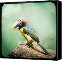 Exotic Bird Canvas Prints - Toucan Canvas Print by Gary Heller