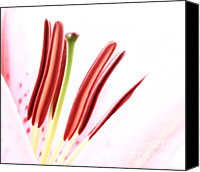 "\""macro Photography\\\"" Canvas Prints - Touching Canvas Print by Kristin Kreet"