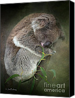 Koala Canvas Prints - Tough life Canvas Print by Jan Pudney