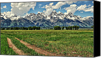 Grand Teton Canvas Prints - Tracks Leading Through Meadow Canvas Print by Jeff R Clow