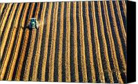 Cultivation Canvas Prints - Tractor Plowing A Field Canvas Print by John Short