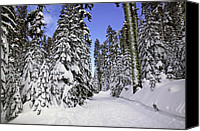 Snowy Canvas Prints - Trail through trees Canvas Print by Garry Gay