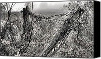 Barbed Wire Fence Canvas Prints - Trapped Canvas Print by JC Findley