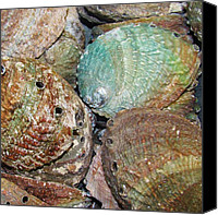 Abalone Seashell Canvas Prints - Treasures VII Canvas Print by Christine  Fifer