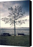 Benches Canvas Prints - tree at lake Constance Canvas Print by Joana Kruse
