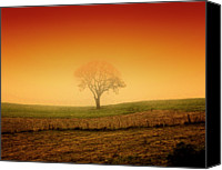 Solitude Canvas Prints - Tree At Sunset And Misty Canvas Print by Antonello