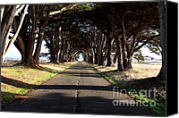 Point Reyes National Seashore Canvas Prints - Tree Canopy Promenade Road Drive . 7D9959 Canvas Print by Wingsdomain Art and Photography