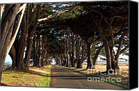 Point Reyes National Seashore Canvas Prints - Tree Canopy Promenade Road Drive . 7D9977 Canvas Print by Wingsdomain Art and Photography
