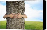 Brandon Tabiolo Canvas Prints - Tree Hugger 2 Canvas Print by Brandon Tabiolo - Printscapes