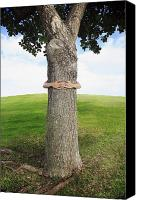 Brandon Tabiolo Canvas Prints - Tree Hugger 3 Canvas Print by Brandon Tabiolo - Printscapes
