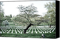 Tree Blossoms Canvas Prints - Tree in Arlington Cemetery  Canvas Print by Scott Sawyer