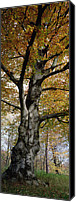 Bayern Canvas Prints - Tree In The Black Forest, Germany Canvas Print by Konrad Wothe