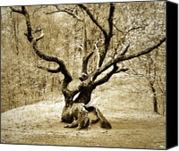 Susan Leggett Canvas Prints - Tree in the Forest Canvas Print by Susan Leggett