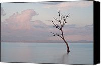 Solitude Canvas Prints - Tree In Water Canvas Print by Flash Parker