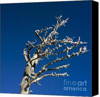 Barren Canvas Prints - Tree in winter against a blue sky Canvas Print by Bernard Jaubert
