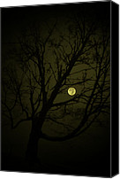 Country Scenes Canvas Prints - Tree Lean Moon Canvas Print by Emily Stauring