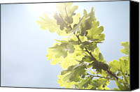 Blue Leaf Canvas Prints - Tree Leaves Against Blue Sky Canvas Print by Adrian Samson
