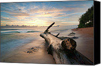Log Canvas Prints - Tree Log Canvas Print by Lee Sie Photography