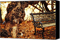 Gnarly Canvas Prints - Tree of Stories Canvas Print by Toni Hopper