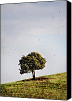 Solitude Canvas Prints - Tree On Hill Canvas Print by Antonio Arcos Aka Fotonstudio Photography