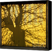Bare Tree Canvas Prints - Tree shadow Canvas Print by Bernard Jaubert