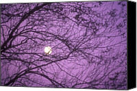 Destinations Canvas Prints - Tree Silhouettes With Rising Moon In Cades Cove, Great Smoky Mountains National Park, Tennessee, Usa Canvas Print by Altrendo Nature