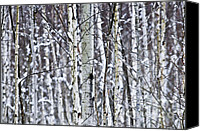 Forest Canvas Prints - Tree trunks covered with snow in winter Canvas Print by Elena Elisseeva