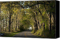 Of Antioch Canvas Prints - Tree Tunnel Canvas Print by David Gehman