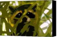 Raccoon Digital Art Canvas Prints - Treed Raccoon Canvas Print by David Lee Thompson
