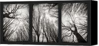 Triptych Canvas Prints - Treeology Canvas Print by Dorit Fuhg