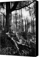Magic Forest Canvas Prints - Trees at the entrance to the Valley of No Return Canvas Print by Simon Marsden