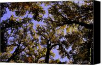 Conversing Photo Canvas Prints - Trees Conversing Canvas Print by Deborah  Crew-Johnson