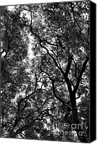 Tall Trees Canvas Prints - Trees in Park Canvas Print by Balanced Art