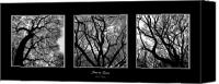 Cities Mixed Media Canvas Prints - Trees in Threes Canvas Print by Diane C Nicholson