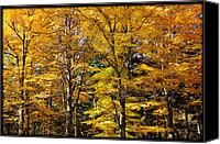 Burning Tree Canvas Prints - Trees of Gold Canvas Print by Luke Moore