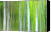 Green Photo Canvas Prints - Trees Canvas Print by Silke Magino