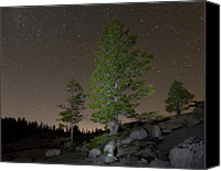 Astronomy Canvas Prints - Trees Under Stars Canvas Print by Sean Duan