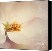Pinkish Canvas Prints - Tresfonds Heart Of A White Blossom Canvas Print by Priska Wettstein