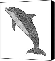 Tropical Beach Drawings Canvas Prints - Tribal Bottle Nose Dolphin  Canvas Print by Carol Lynne
