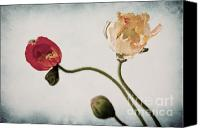 Floral Canvas Prints - Trio  Canvas Print by Angela Doelling AD DESIGN Photo and PhotoArt