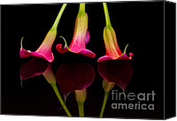 Calla Lily Canvas Prints - Trio Reflections Canvas Print by Susan Candelario