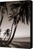 On The Beach Canvas Prints - Triple Palms Canvas Print by Susanne Van Hulst