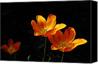 Orange Flower Photo Canvas Prints - Triples Canvas Print by Lois Bryan