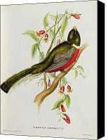 Perch Canvas Prints - Trogon Ambiguus Canvas Print by John Gould