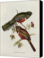 Perch Canvas Prints - Trogon Collaris Canvas Print by John Gould