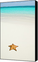 Star Canvas Prints - Tropical Beach And Starfish Canvas Print by Mehmed Zelkovic