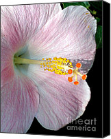 Texture Floral Canvas Prints - Tropical Hibiscus Canvas Print by Kaye Menner