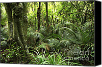 Rainforest Canvas Prints - Tropical jungle Canvas Print by Les Cunliffe