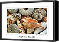 Urchin Canvas Prints - Tropical Shells... Greeting Card Canvas Print by Kaye Menner