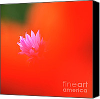 Wild-flower Canvas Prints - Tucked away  Canvas Print by Heiko Koehrer-Wagner